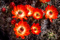 Easter at Phoenix Desert Botanical Garden